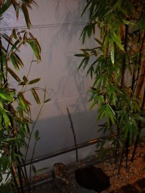 黒竹赤ちゃん